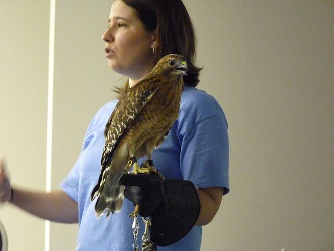 BRWC Program Hawk.jpg