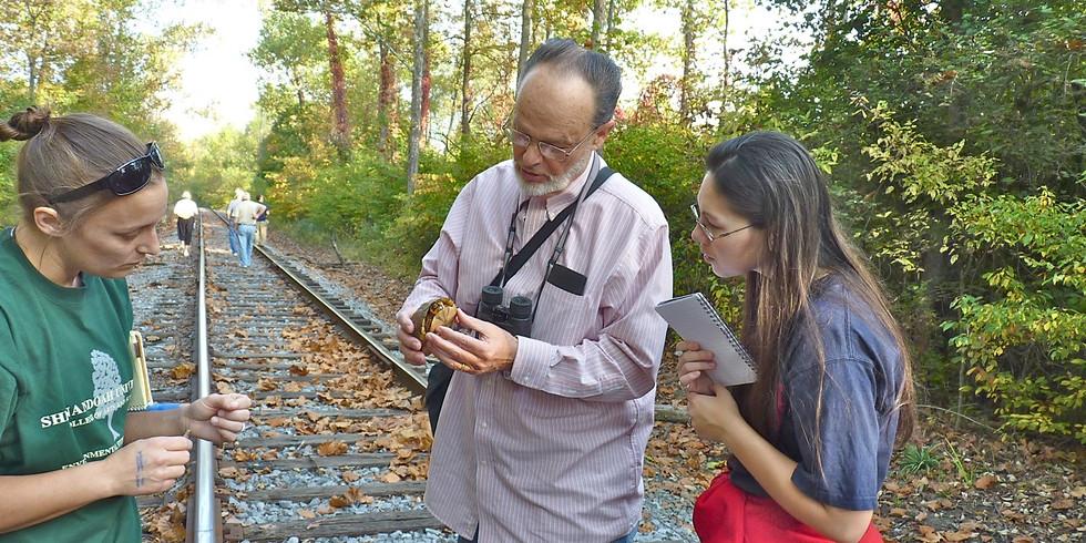 Abrams Creek Wetlands Preserve Bird and Nature Walks (3)