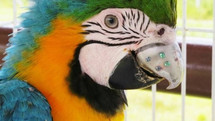 Gigi the Macaw Got the World's First 3D Printed Titanium Beak