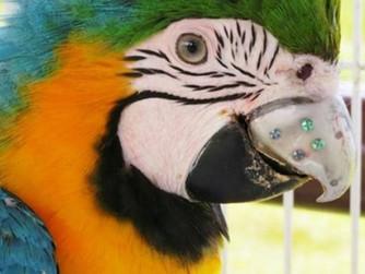 Gigi the Macaw Got the World's First 3D Printed Titanium Beak