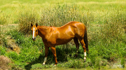 Horse in the meadow