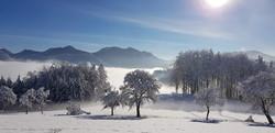 Weide Grünburg im Winter