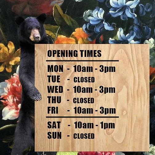 black-bear-standing new times2.jpg