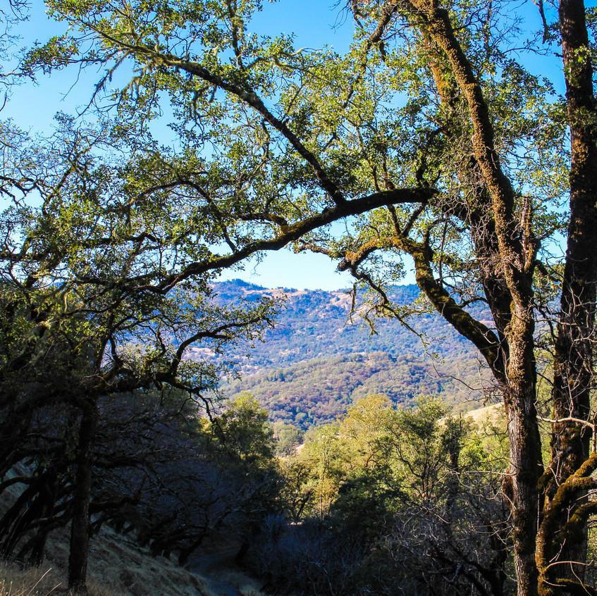 Scenes of Northern California 2