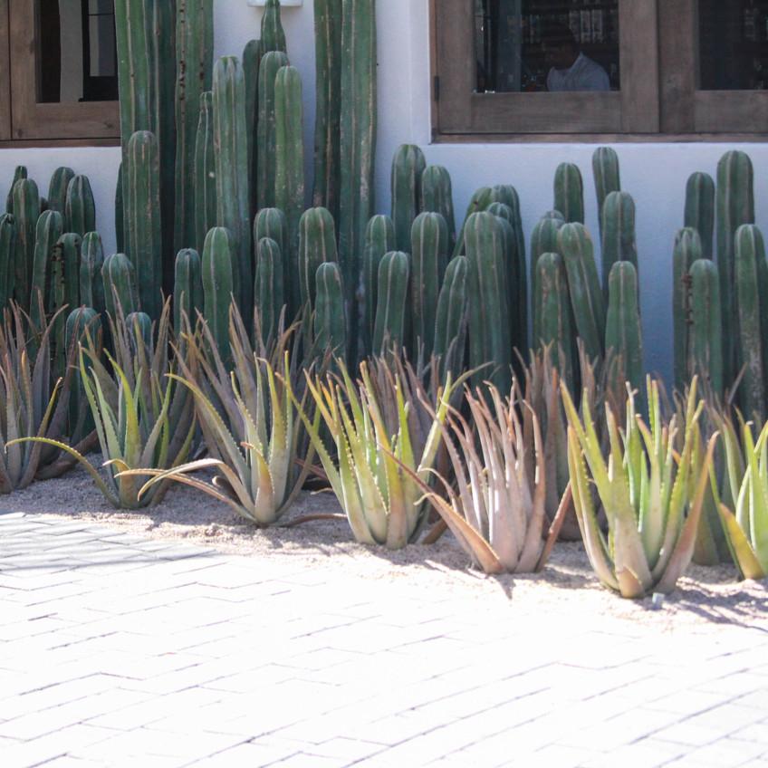 Exterior Cacti 2
