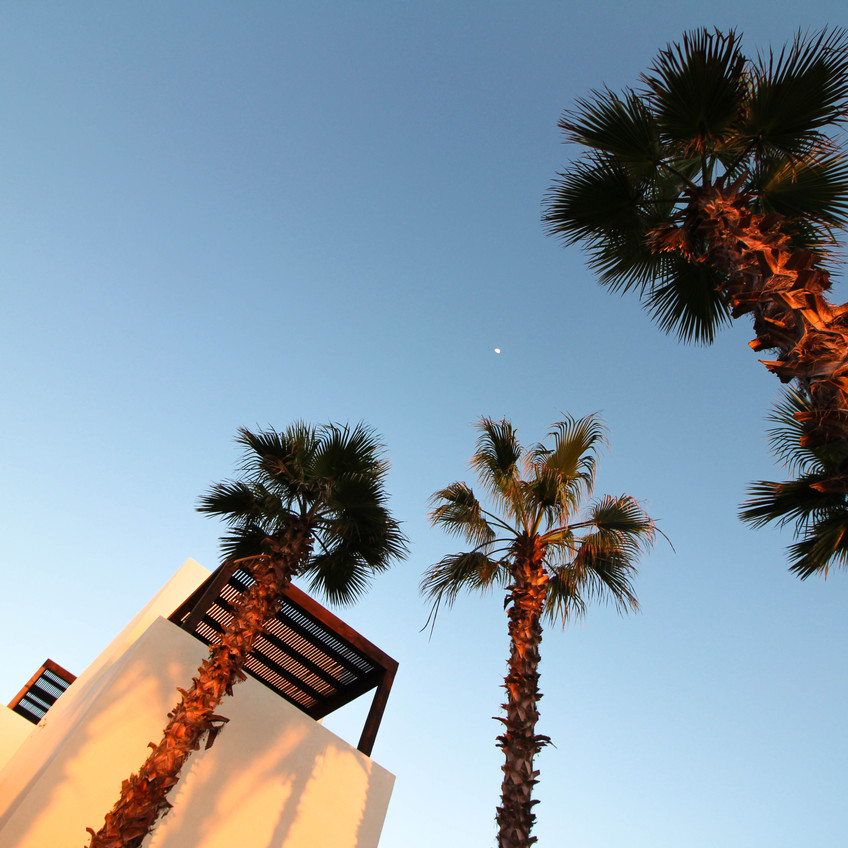 Palm Perspectives at San Cristobal