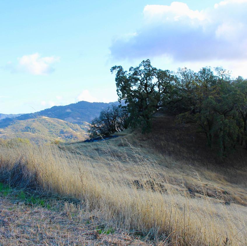Scenes of Northern California 1