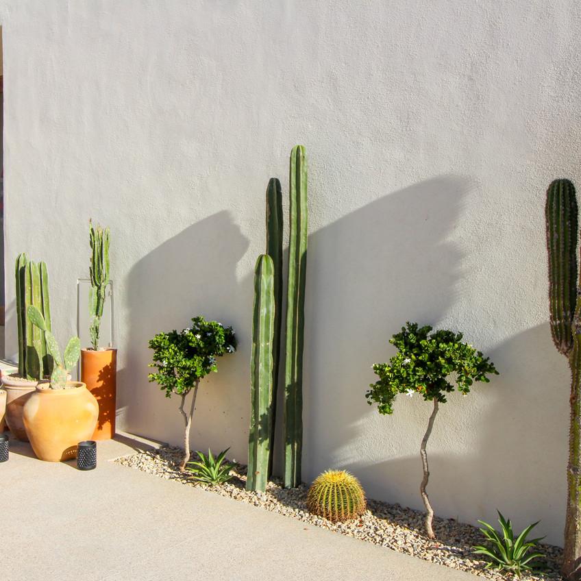 Exterior Cacti 1