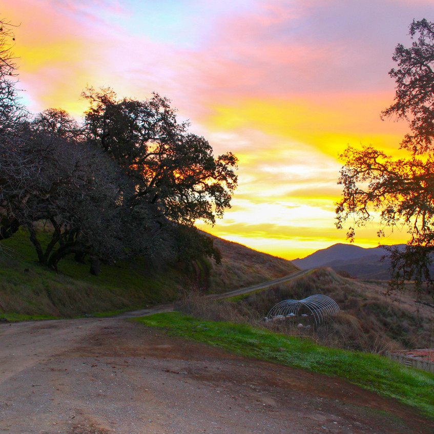 Scenes of Northern California 5