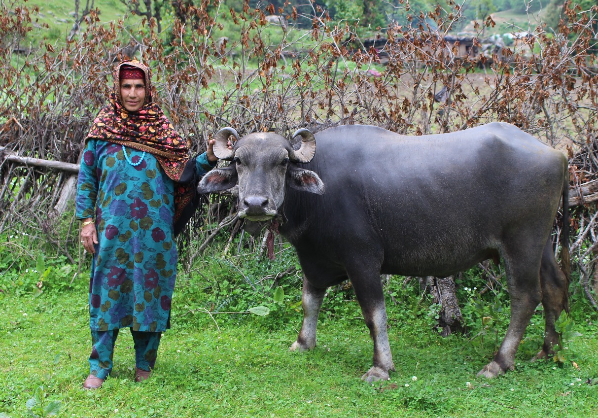 Kashmir34_edited