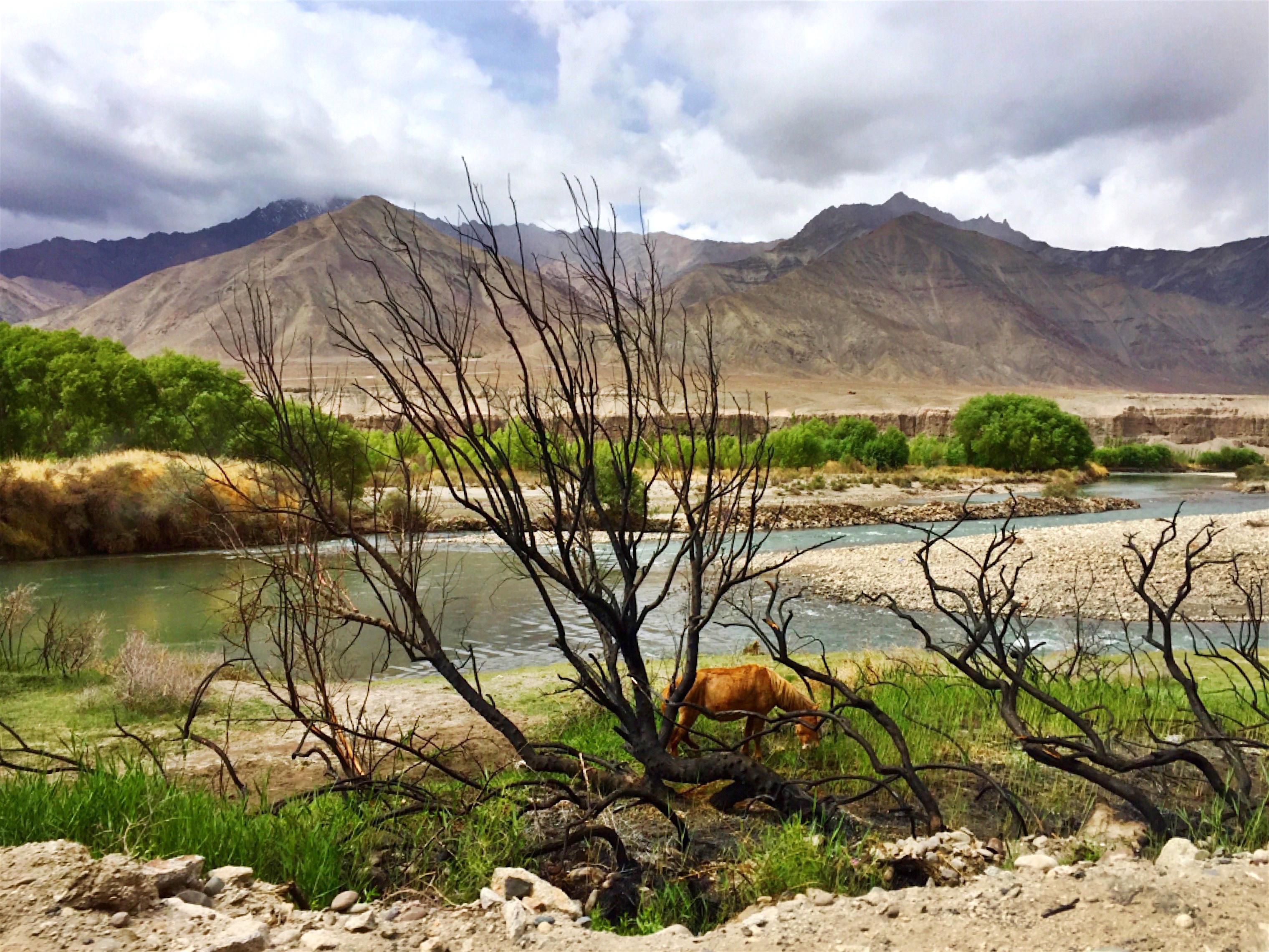 Ladakh14