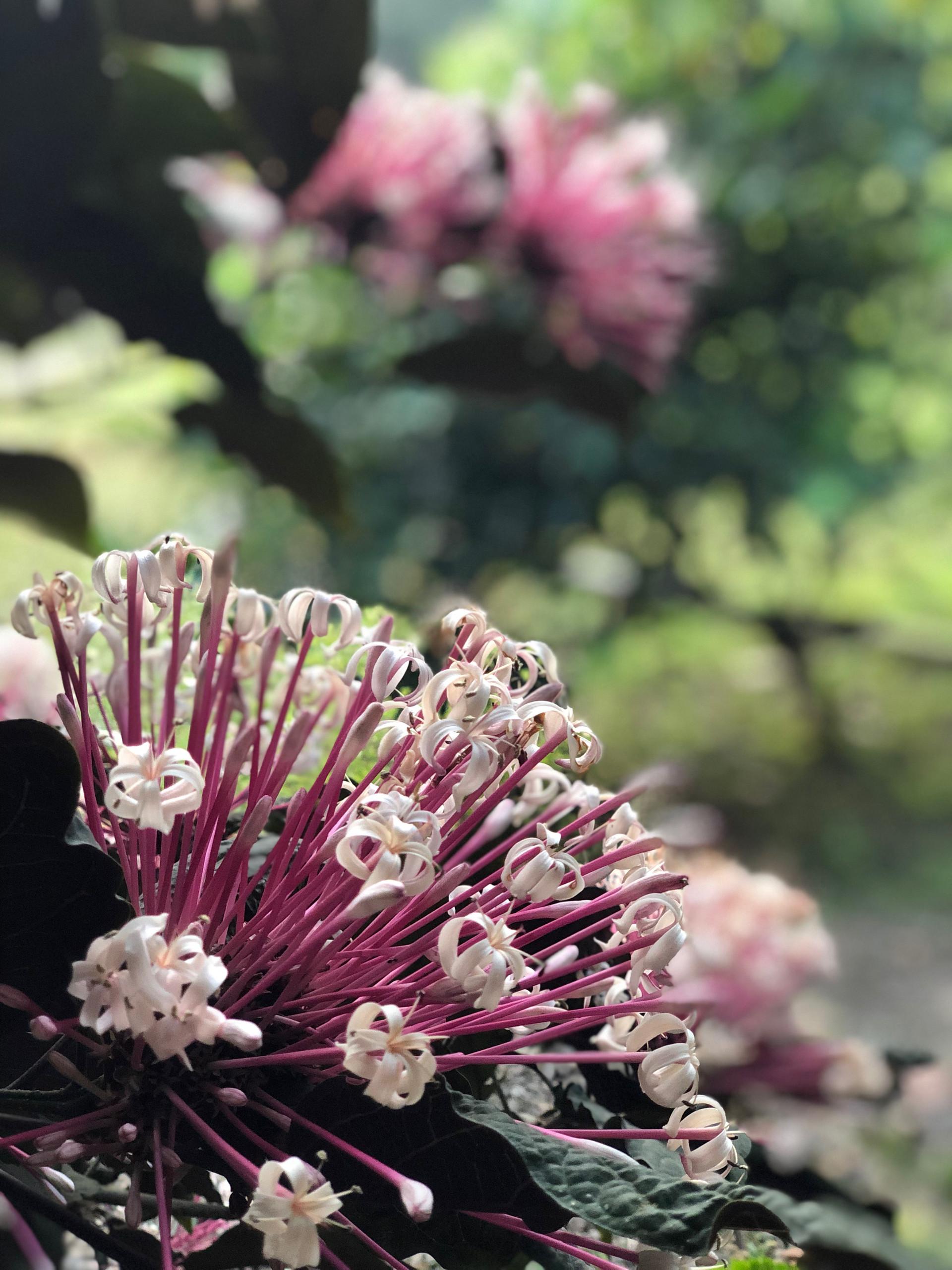 Thailand Flowers
