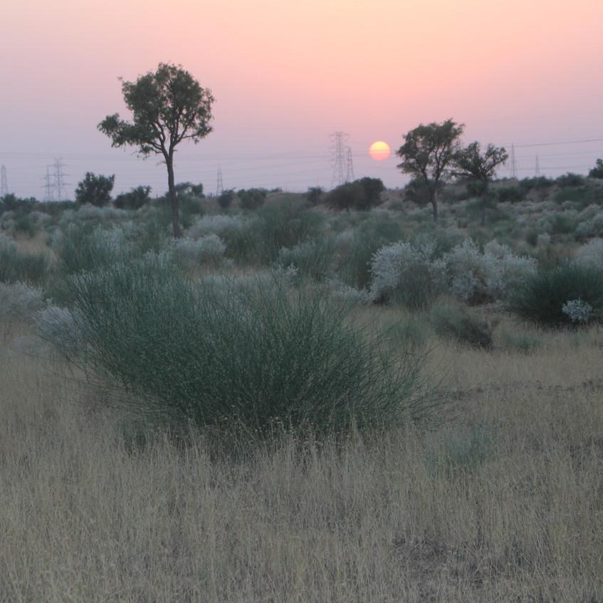 Twilight in the Thar desert, Bikaner