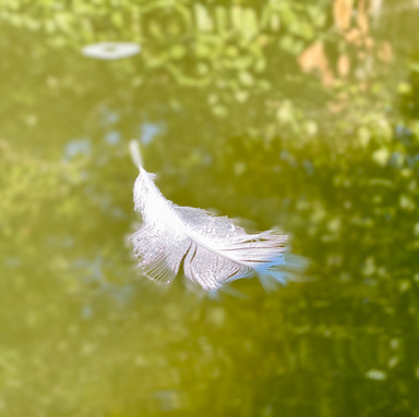 The Ephemeral Lightness of Being