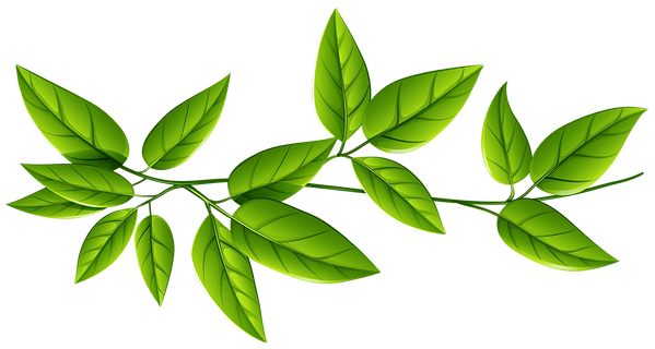 Green_Leaves_PNG_Image.png