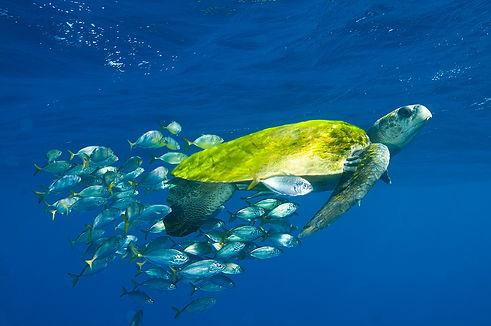 5-especies-de-tartarugas-marinha-1.jpg