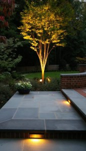 Uplighting and accent landscape lighting