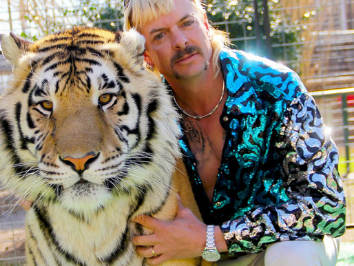 10 Reasons why your fiberglass pool needs a Tiger?