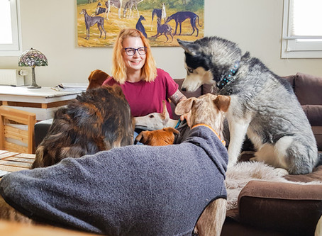 Was Hunde wirklich brauchen - und was wir noch von ihnen lernen können.