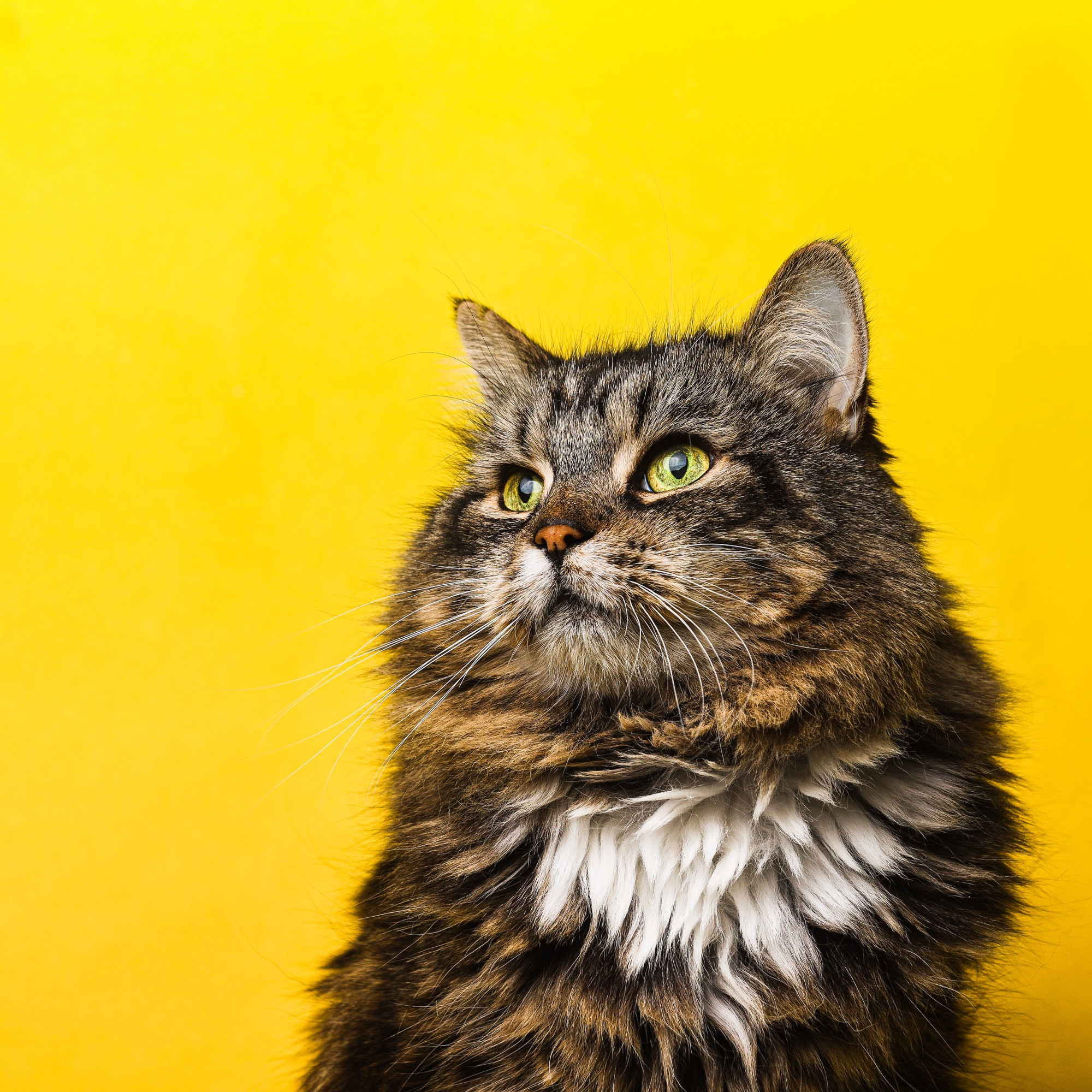 Add-On Pet Portrait Session (In Studio)