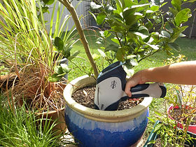 Bruker Titan XRF Soil Testing on pot plant soil