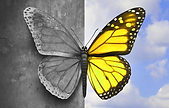 Two-toned-butterfly-dp.png