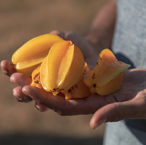 Local star fruit