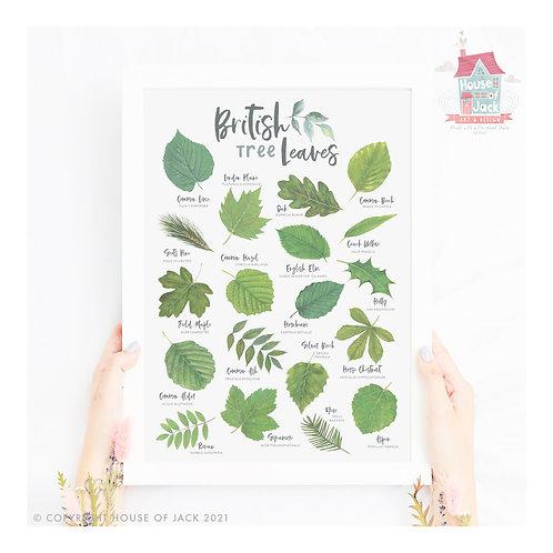 British Nature - Tree Leaves Art Print