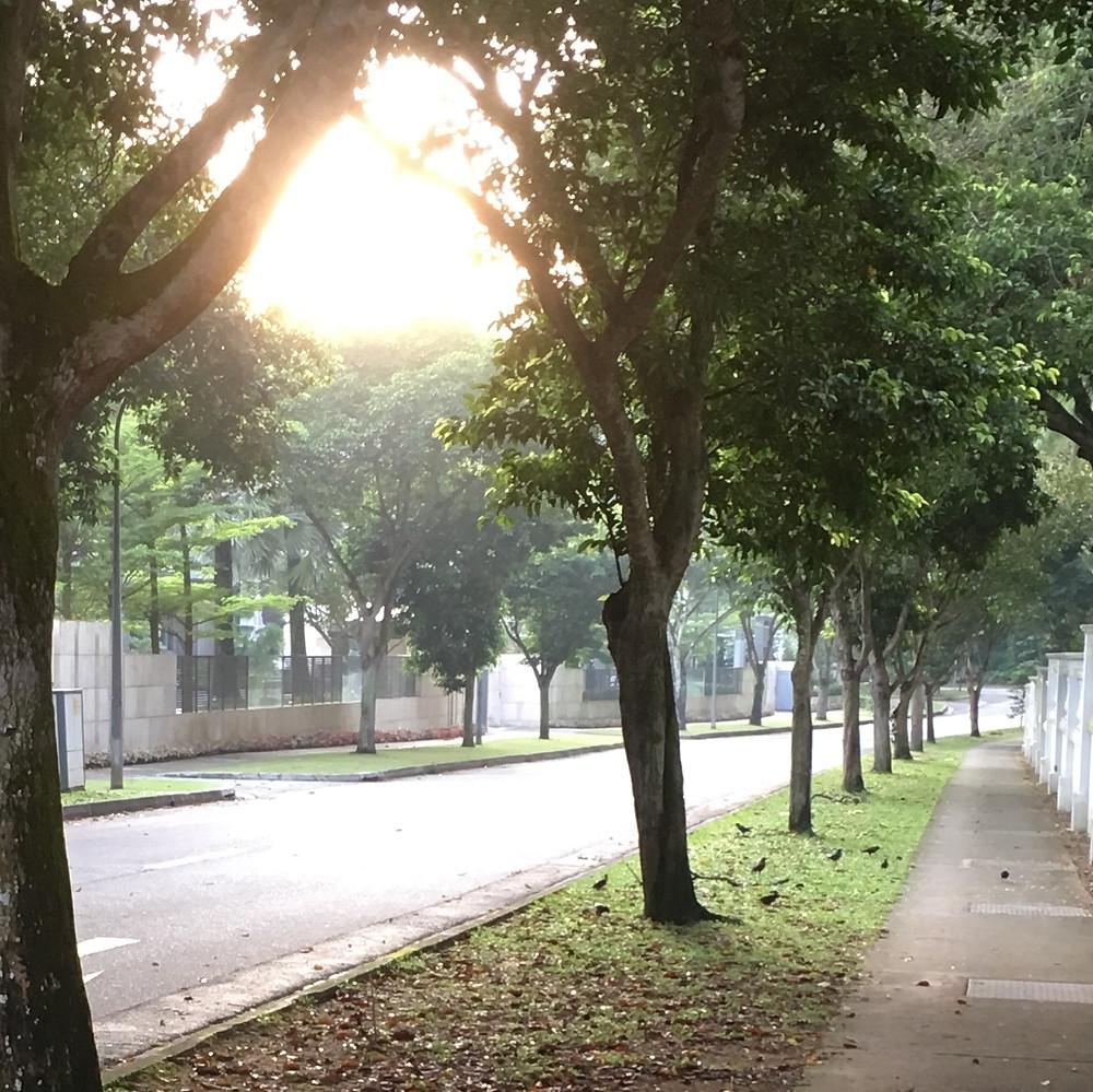 www.smadarron.com