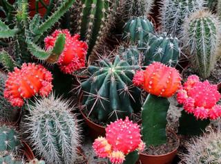 Páťáci vyrazili na výstavu kaktusů a sukulentů