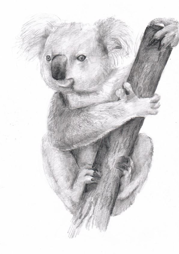 sbirka-pro-australii-koala