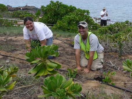 Why Do We Restore Our Coastal Dunes?