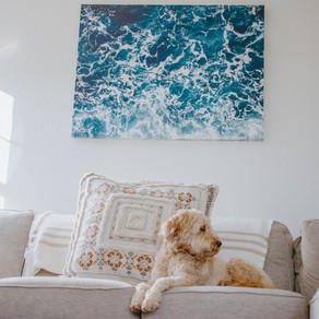 Living Room Inspo Featuring Niche Canvas