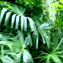 Stefanie Kunckler YMONOS * Palm Tree * Teaser 2021