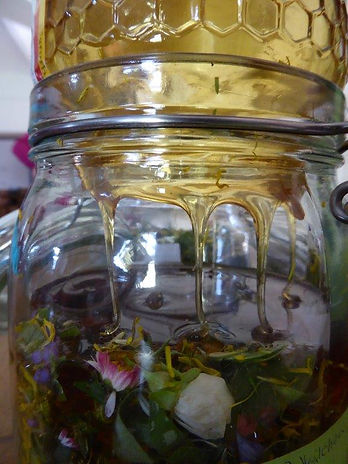 Frühjahr_Hustenpflanzen.jpg