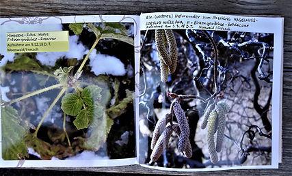 Herbarium (3).JPG
