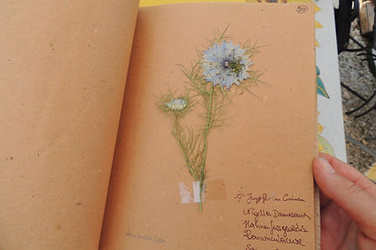 Herbarium (6).JPG
