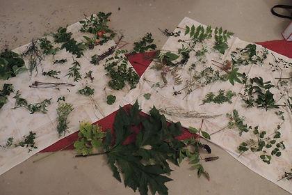 Giftpflanzen.jpg