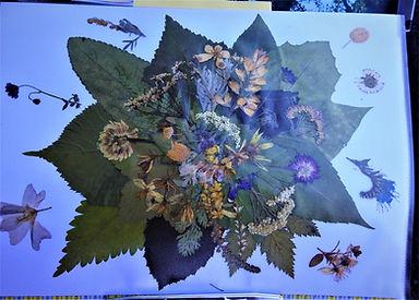 Herbarium (2).JPG