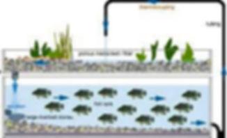 aquaponics-system-אקוופוניקה לגידול