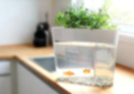 אקוופוניקה - לגדל צמחים עם דגים