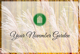 Your November Garden