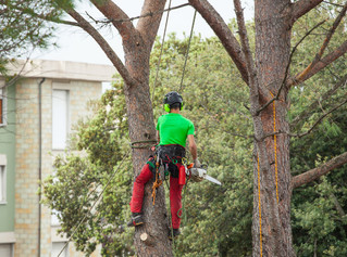 3 Reasons to Leave Tree Work to the Professionals