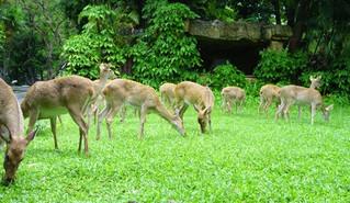 Deer Wars Coming to Your Neighborhood