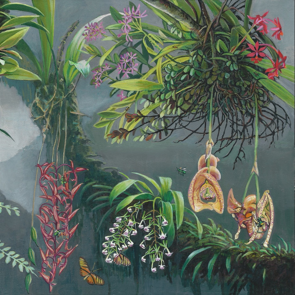 Painting of orchids found in Costa Rica and their insect pollinators