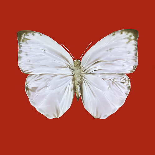 White City Gallery presents 'The Present' by Mauricio Ortiz (butterfly painting)