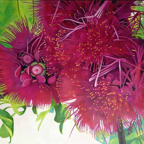 'Manzana de Agua II' (syzygium malaccense, water apple flower) original painting by Deirdre Hyde, White City Gallery London