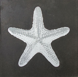 'Silver Star' by Mauricio Ortiz - an etching of sea star (starfish) on a zinc plate
