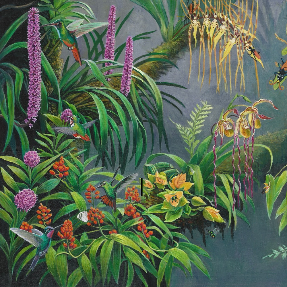 Painting of Costa Rican orchids being pollinated by hummingbirds and insects