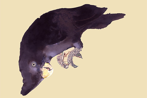 White City Gallery presents 'Black Cockatoo' by Mauricio Ortiz